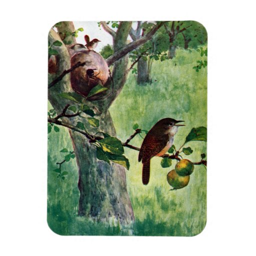 House Wrens Nesting in an Apple Tree Flexible Magnets