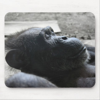 Houston Zoo Mouse Pad