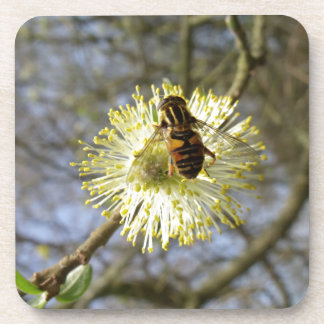 Hoverfly On Willow Blossom Drink Coasters