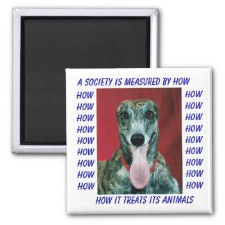 HOW MAGNET GREYHOUND RESCUE DOG SOCIETY & ANIMALS