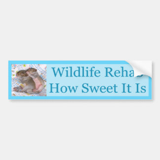 How Sweet Rehab - Squirrels Bumper Stickers