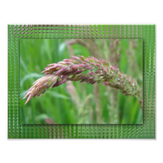How the Grass Grows Photo Print