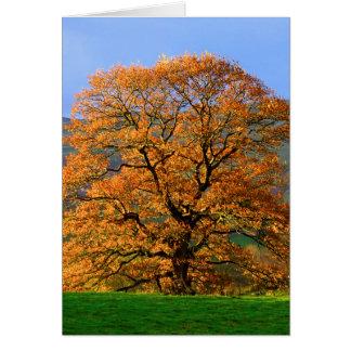 Howgillhounds cards Autumn Colour