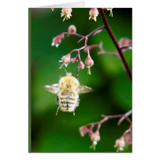 Howgillhounds cards Bee