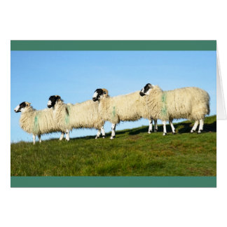 howgillhounds cards Fell Sheep