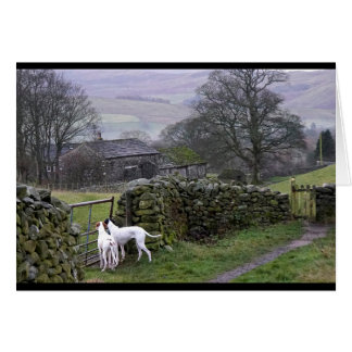 Howgillhounds cards Pointers in the Yorkshire Dale