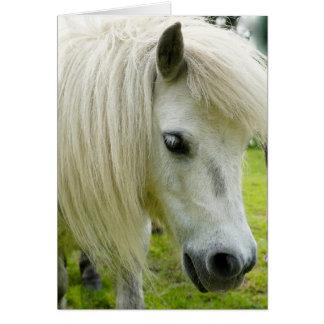 Howgillhounds cards Shetland Pony