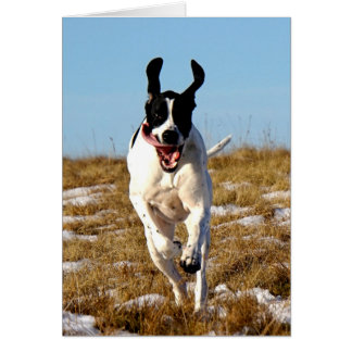 Howgillhounds Leaping Pointer Greeting Card