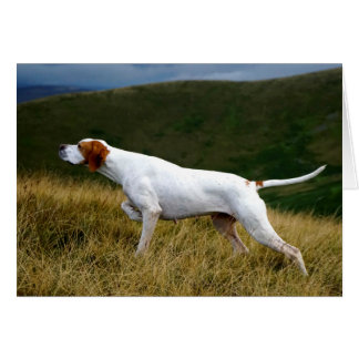 Howgillhounds Pointer working Greeting Card