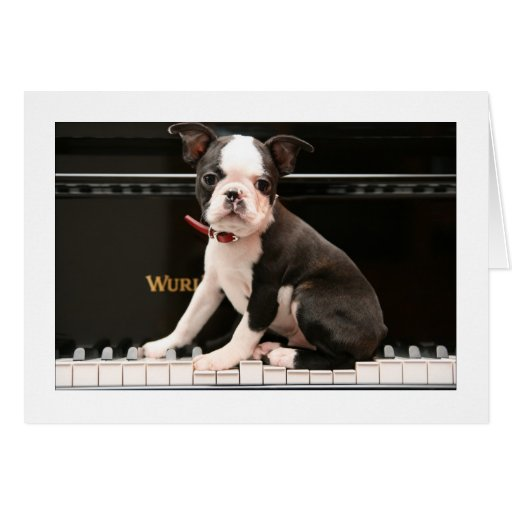 Howie on the Piano Greeting Cards