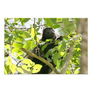 Howler Monkey in the Jungle Photo