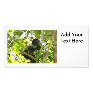 Howler Monkey Picture Photo Cards