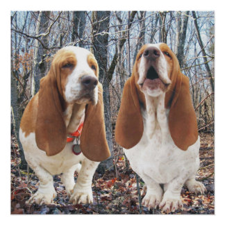 Howling Basset Hound Woodland Poster