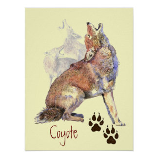 Howling Coyote Poster