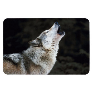 Howling Gray  Wolf Photograph Primium Magnet