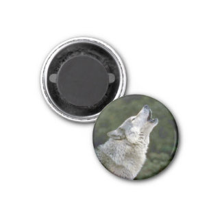 Howling grey wolf beautiful photo portrait, gift 3 cm round magnet