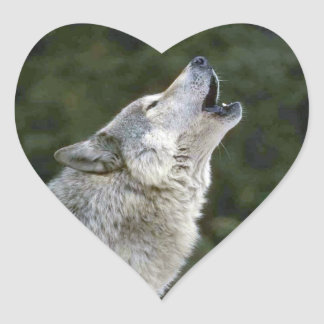 Howling grey wolf beautiful photo portrait, gift heart sticker