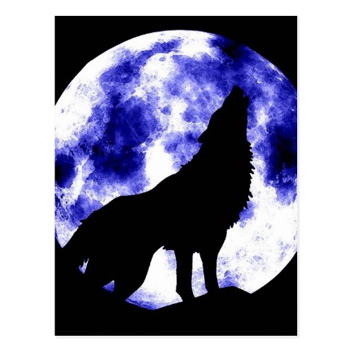 Howling Wolf at Moon Post Card