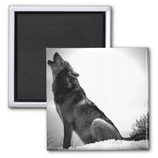 Howling Wolf in Snow Square Magnet