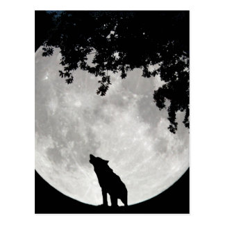 Howling Wolf Moon and Branches Postcard