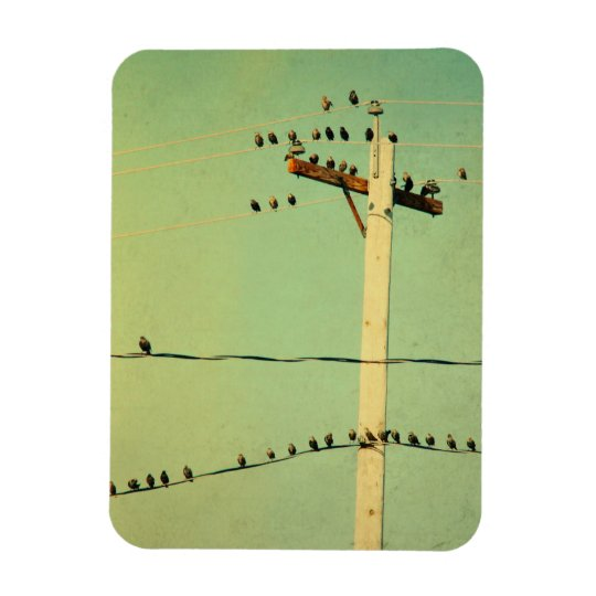 How's That For Tweeters Rectangular Photo Magnet