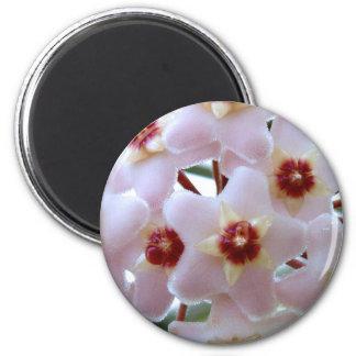hoya carnosa flower 6 cm round magnet