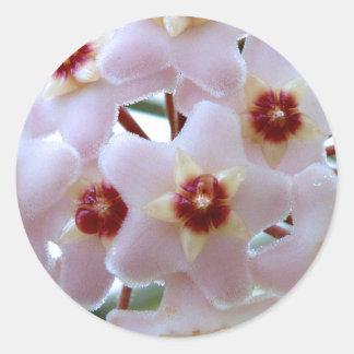 hoya carnosa flower round sticker