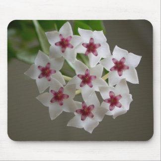 Hoya lanceolata ssp. bella mouse pad