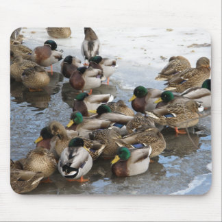 Huddle of Ducks in Winter Mouse Pad