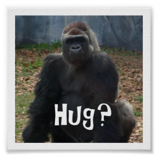 Hug? Gorilla Poster