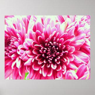 huge chrysanthemum pink flower canvas posters