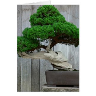 Huge Juniper Bonsai Card