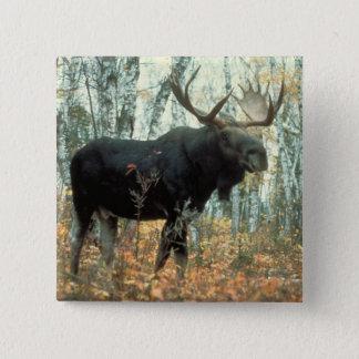 Huge Moose 15 Cm Square Badge