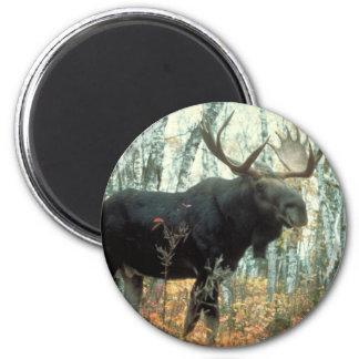 Huge Moose 6 Cm Round Magnet