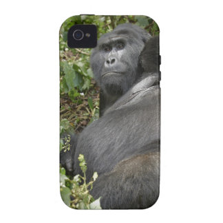 huge silverback mountain gorilla iPhone 4/4S covers