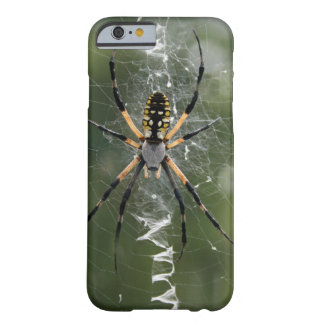 Huge Spider / Yellow & Black Argiope Barely There iPhone 6 Case