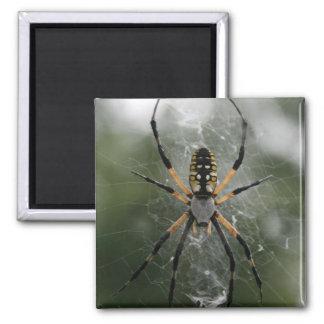 Huge Spider / Yellow & Black Argiope Square Magnet