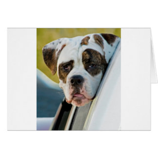Huge Spotted Dog Looking Out Car Window Greeting Card