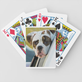 Huge Spotted Dog Looking Out Car Window Deck Of Cards