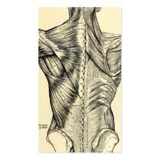 Human Anatomy Art Back Muscles (circa 1890) Pack Of Standard Business Cards