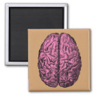 Human Anatomy Brain Magnet