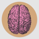 Human Anatomy Brain Round Stickers