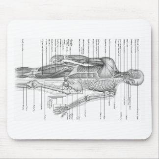 Human Anatomy Chart Mouse Mat