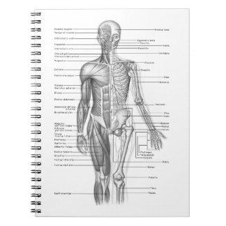 Human Anatomy Chart Spiral Notebook