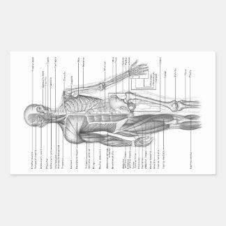 Human Anatomy Chart Stickers