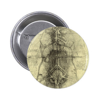 Human Anatomy, Female Torso by Leonardo da Vinci 6 Cm Round Badge
