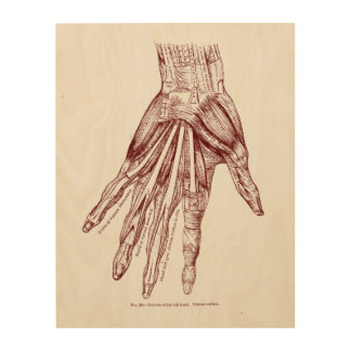 Human Anatomy Hand Muscles Red Wood Print