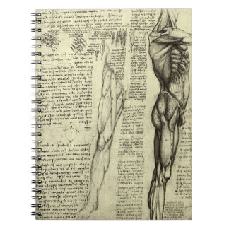 Human Anatomy Male Muscles by Leonardo da Vinci Notebooks