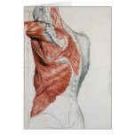 Human Anatomy; Muscles of the Torso and Shoulder Greeting Cards