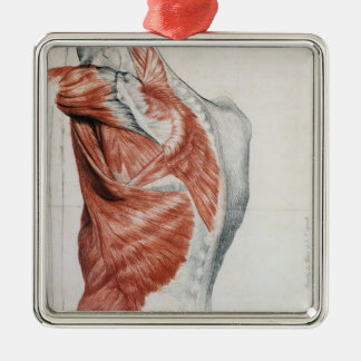 Human Anatomy; Muscles of the Torso and Shoulder Christmas Ornament